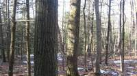 hardwoods forest stand