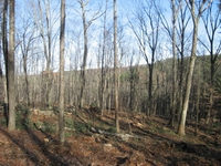 hardwoods forest