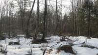 winter forest destruction