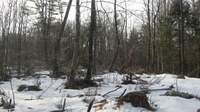 winter forest destruction