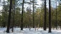 shelterwood regeneration cutting