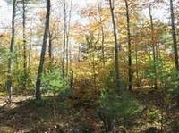 Improved Forest