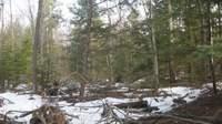 forest massacre